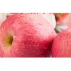 正宗陕西沙地红富士洛川苹果10斤整箱当季新鲜水果冰糖心平安果