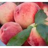 现货北京水蜜桃水果新鲜平谷大桃鲜桃软桃多汁早桃12个顺丰包邮