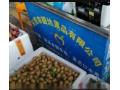 正在新建的水果批发市场 (23播放)